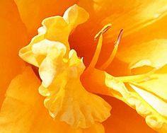 Yellow daffodil petal